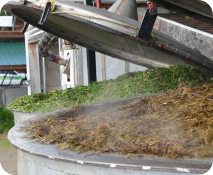 distillation de retailles de cèdre